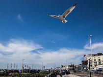 Seafront Seagull